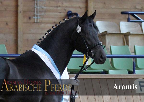 Aramis APB-D. Reitpferd (Hamit AA / Ariane). *2012Züchter und Besitzer: M. Diepenkofen, MellenthinFoto: G. Waiditschka / IN THE FOCUS