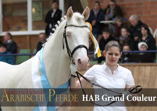 HAB Grand Couleur APb-Spezial (Klepholms Ikarios / Gondy)Züchter: H. Gründel, BelgienBesitzer: N. Gatermann, DuvennestFoto: G. Waiditschka / IN THE FOCUS