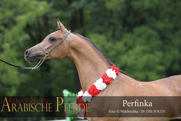 Perfinka (Esparto / Perfirka), Polnische Reserve-Junioren-Championesse 2012
